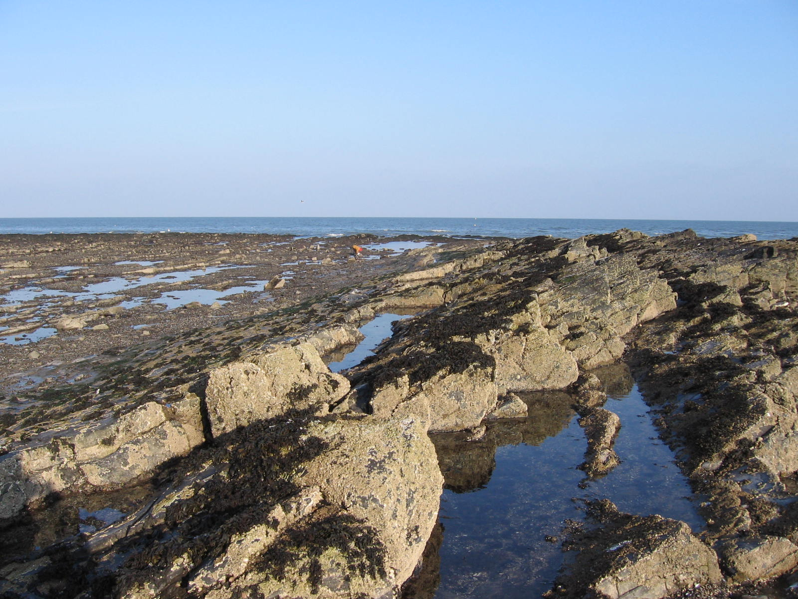 Fully funded 4-yr PhD in Marine Ecology available at