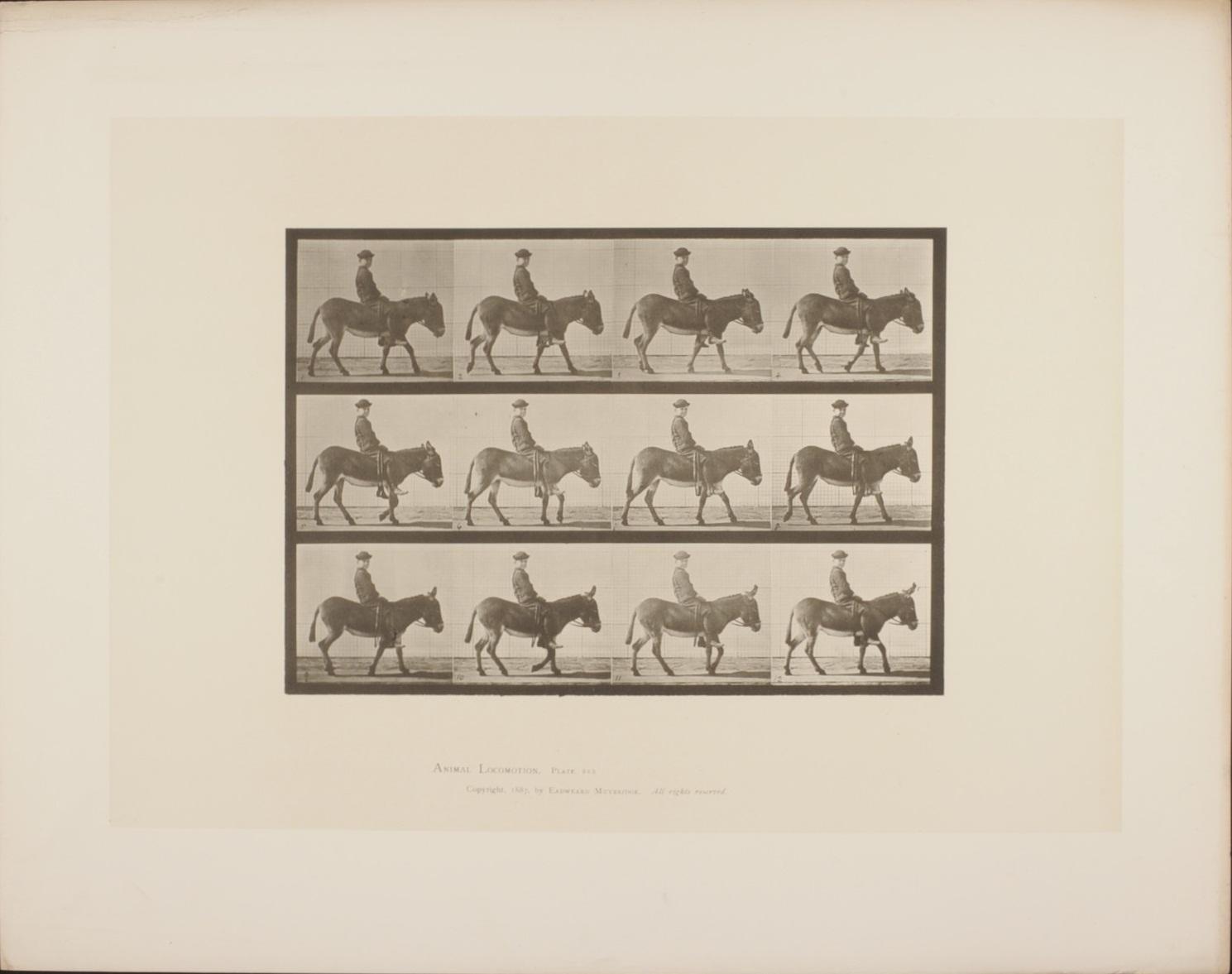 Animal locomotion, plate 655