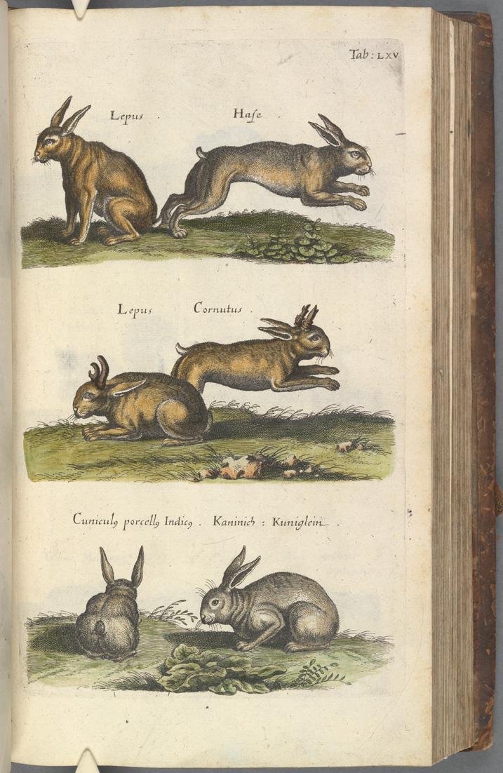 """John Jonston: """"Historiae naturalis de quadrupedibus"""" Frankfurt, [1650] Shelfmark: Fag.M.4.51"""