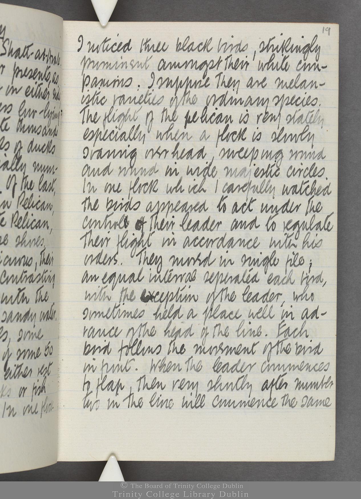 TCD MS 10515 folio 19r
