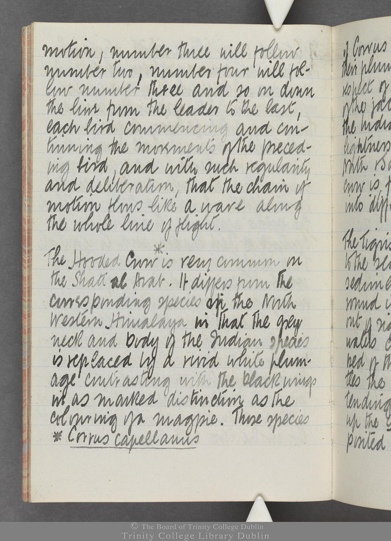 TCD MS 10515 folio 19v