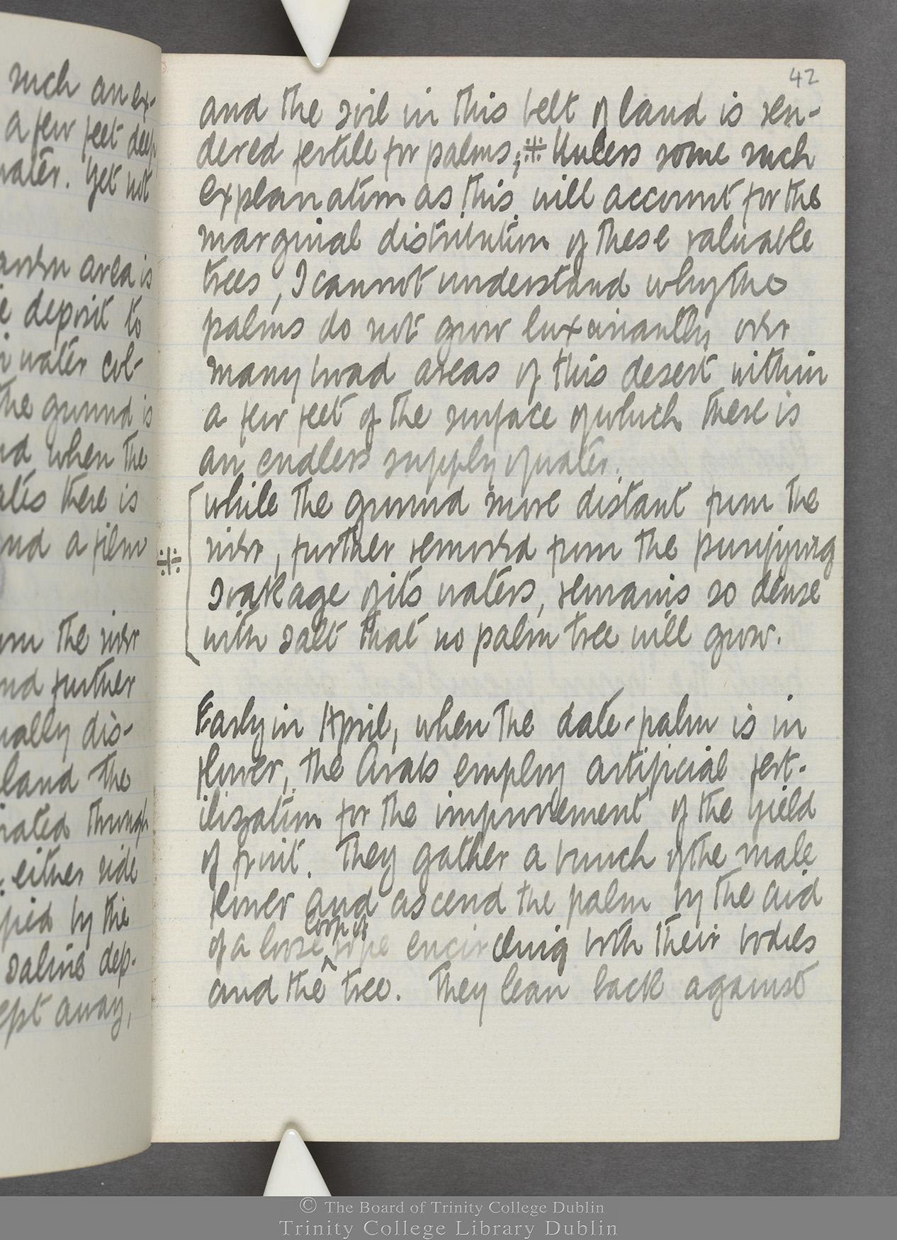 TCD MS 10515 folio 42r