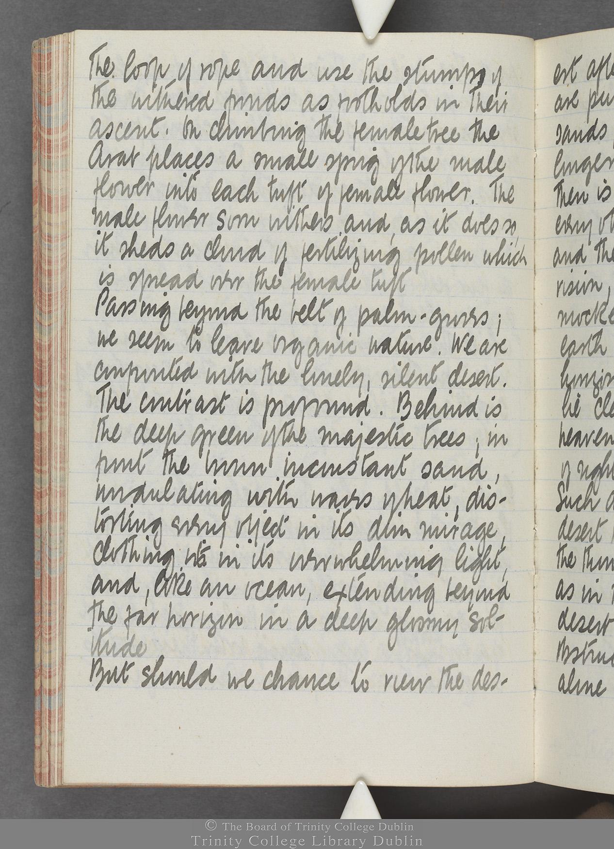 TCD MS 10515 folio 42v