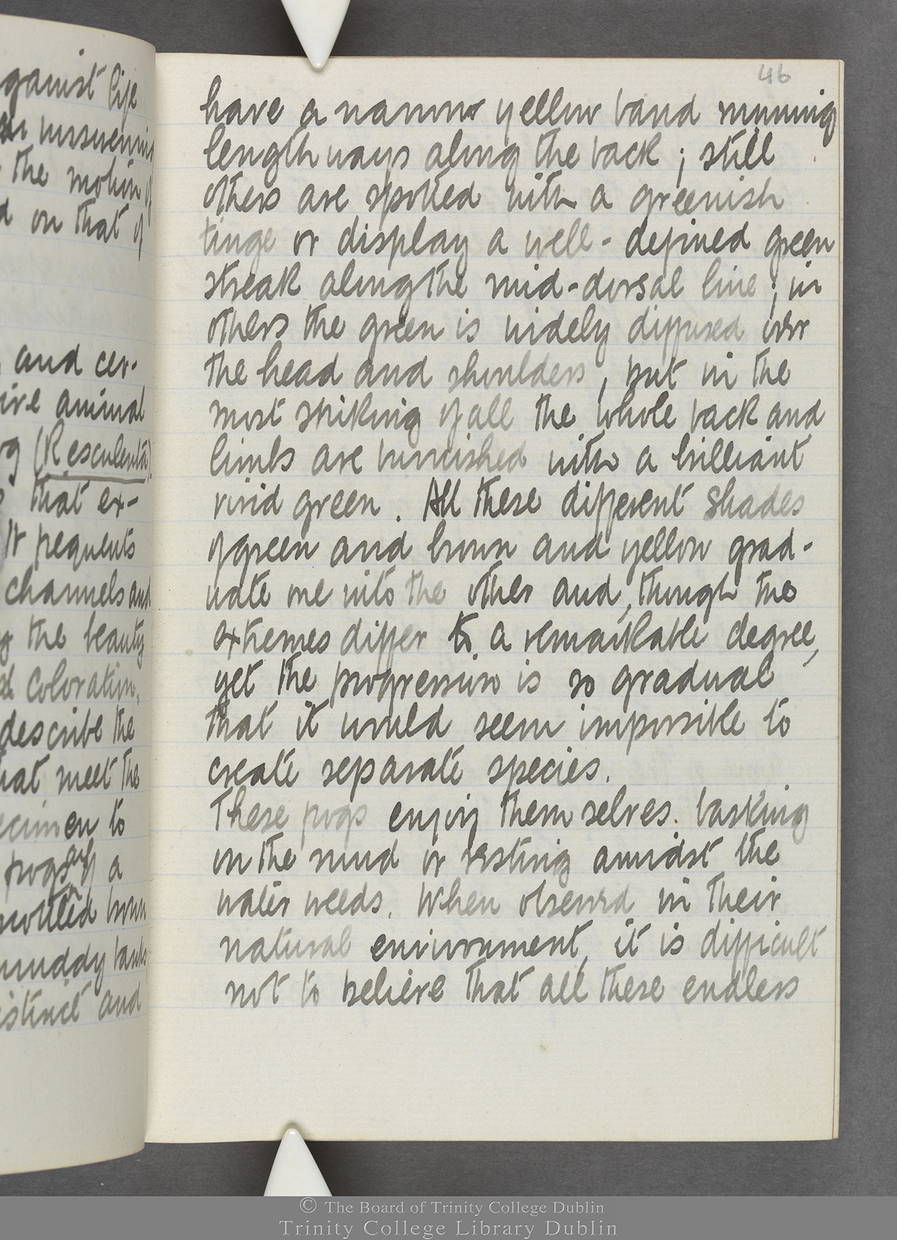TCD MS 10515 folio 46r