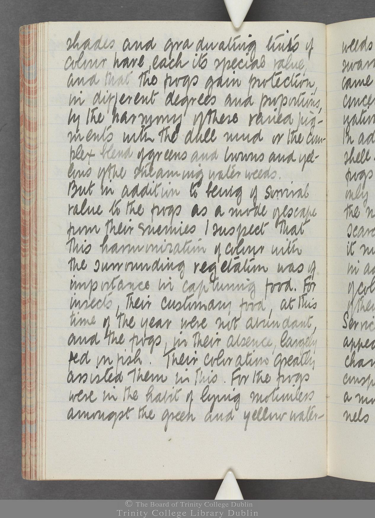 TCD MS 10515 folio 46v