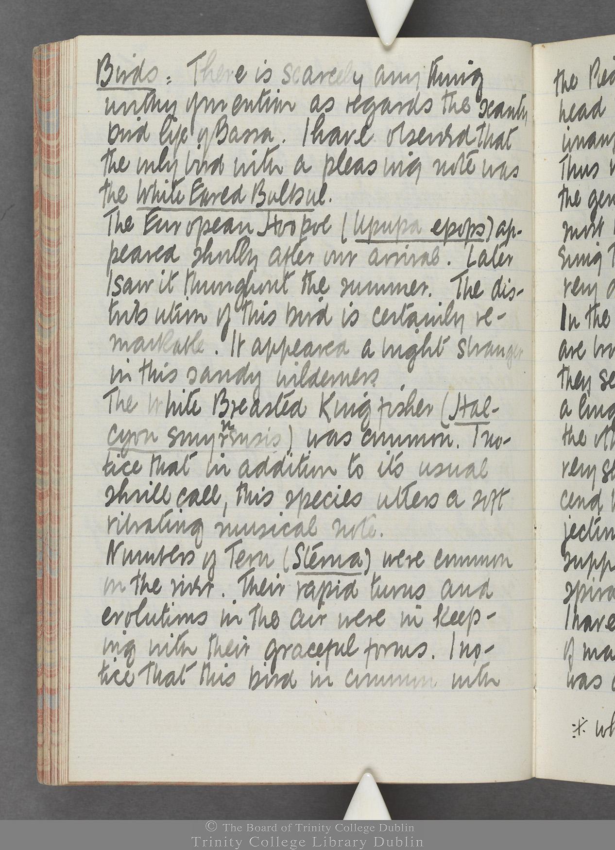 TCD MS 10515 folio 48v
