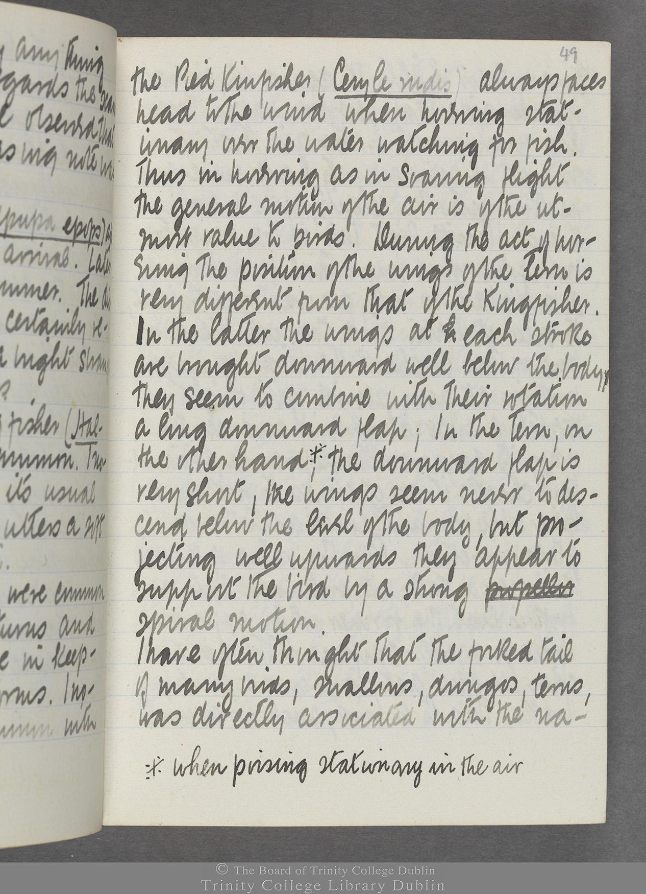 TCD MS 10515 folio 49r