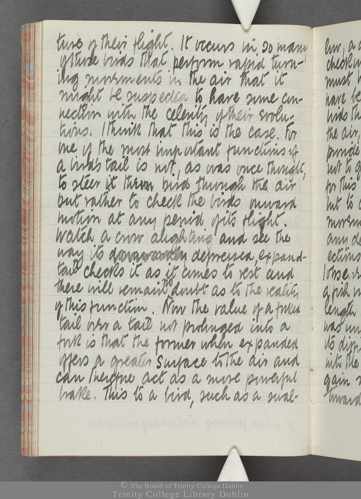 TCD MS 10515 folio 49v