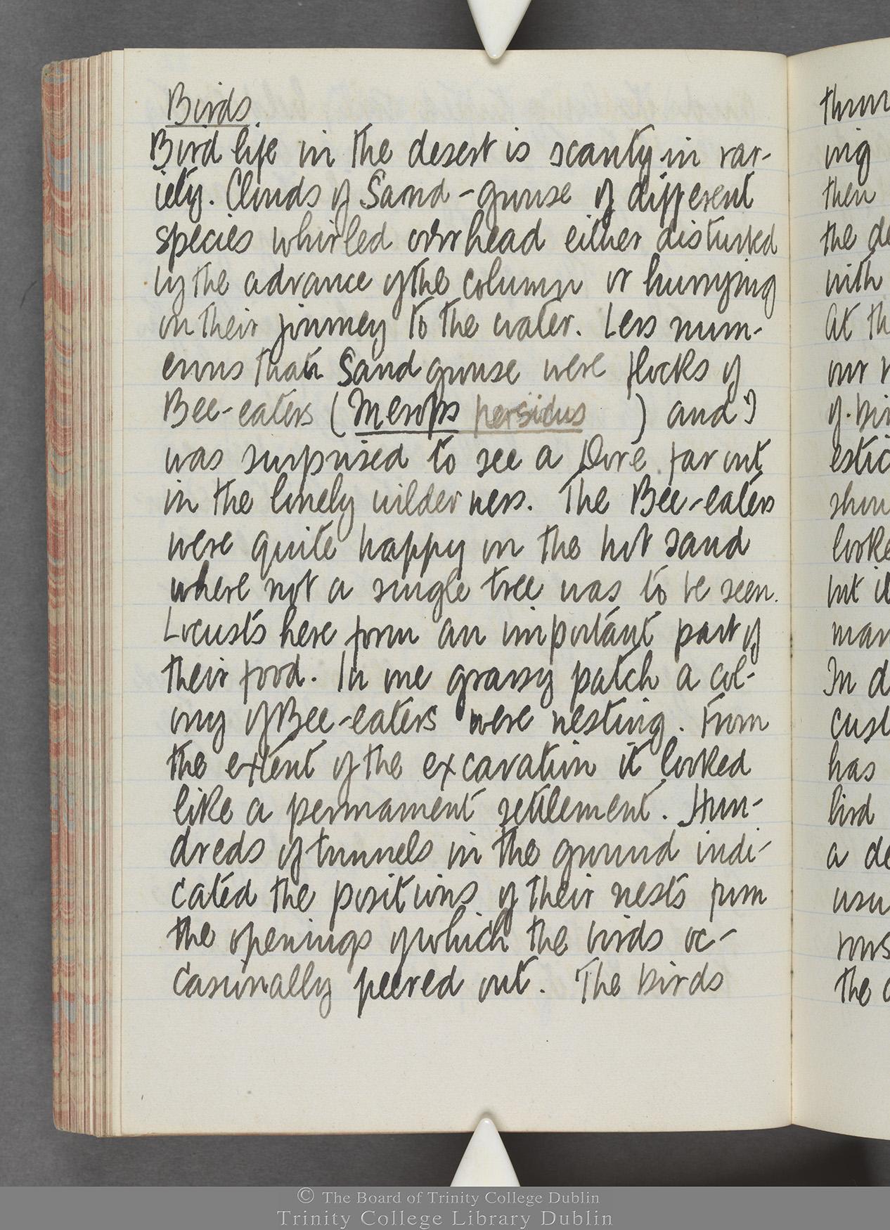 TCD MS 10515 folio 82 verso