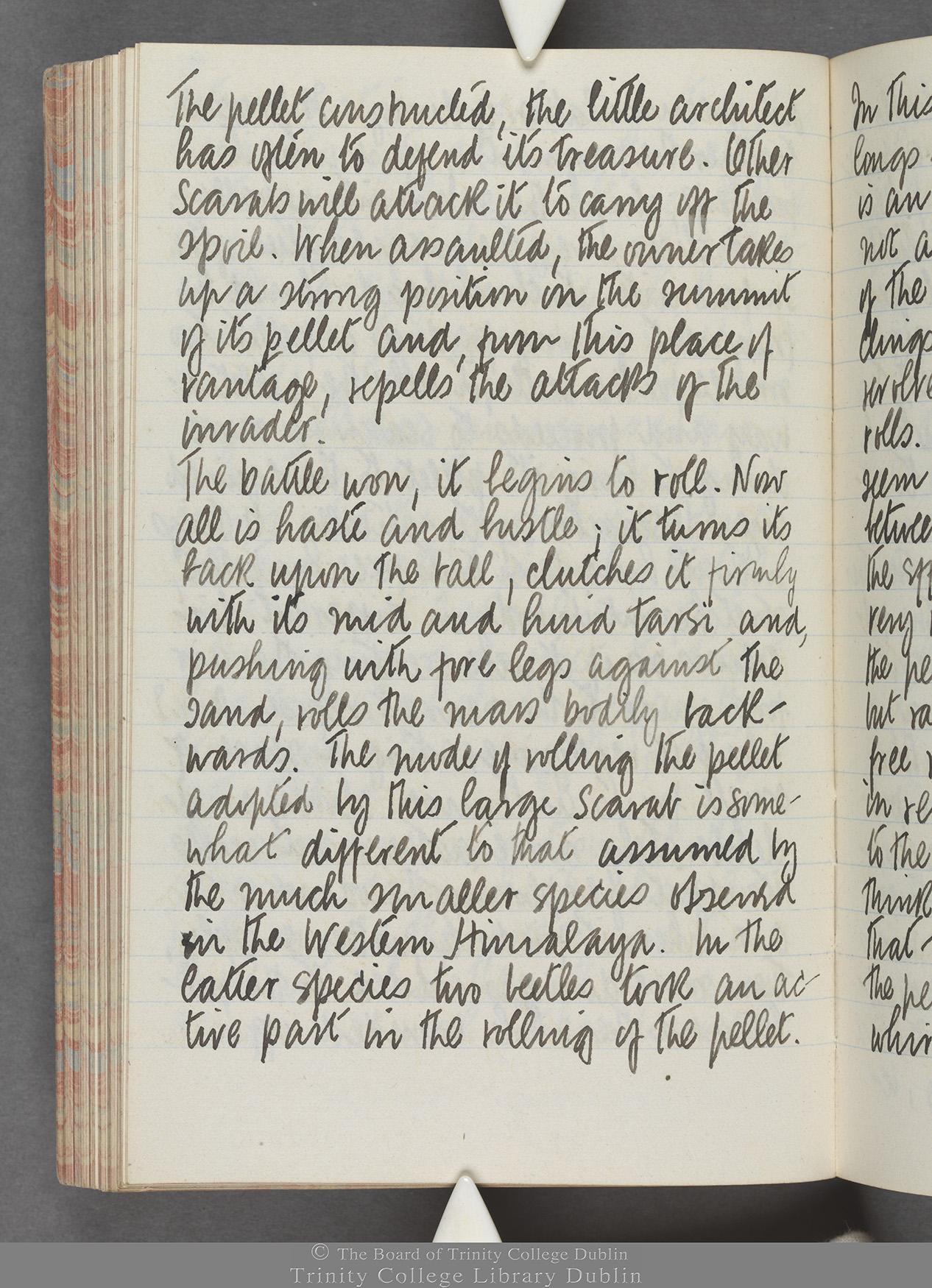 TCD MS 10515 folio 91 verso