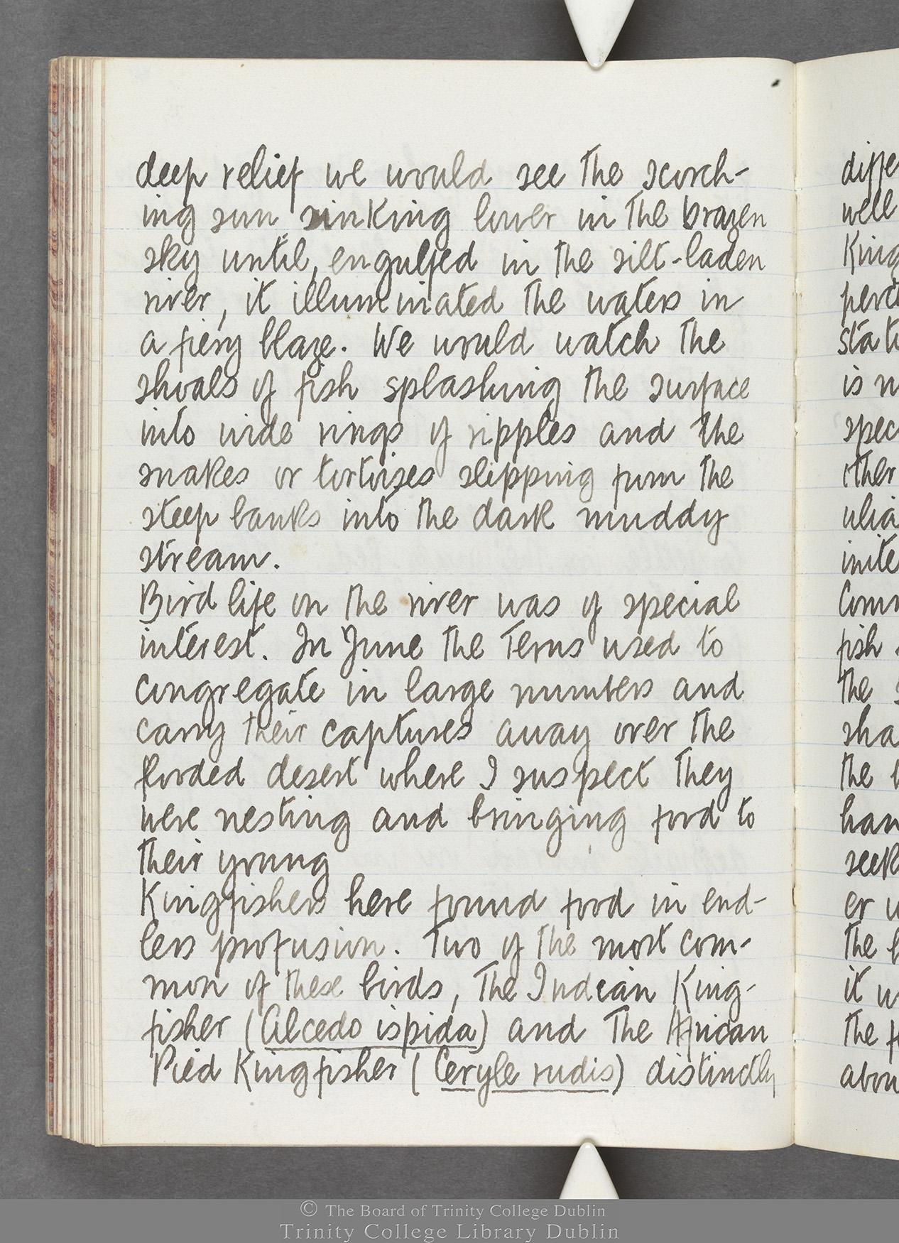 TCD MS 10516 folio 60 verso