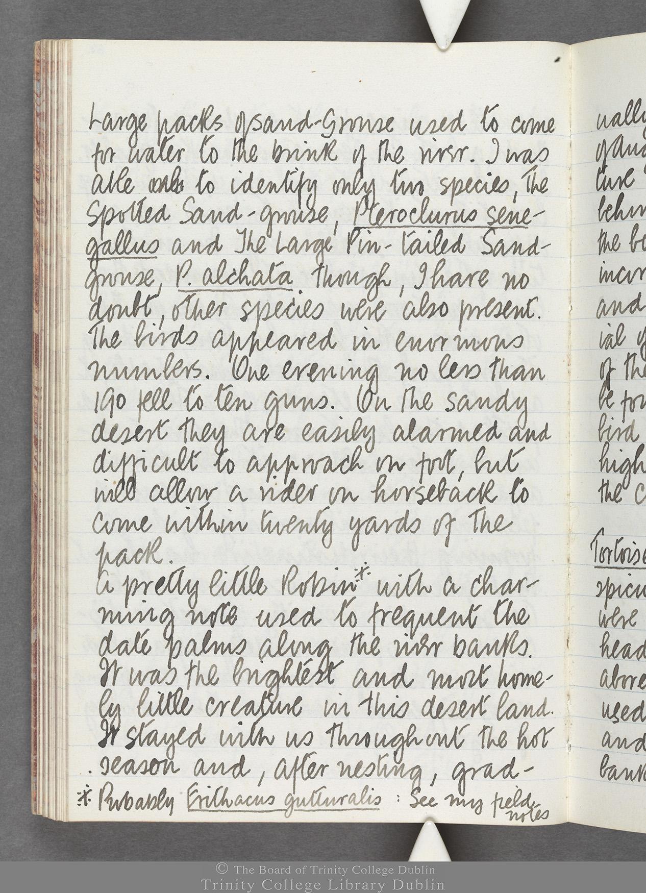 TCD MS 10516 folio 62 verso