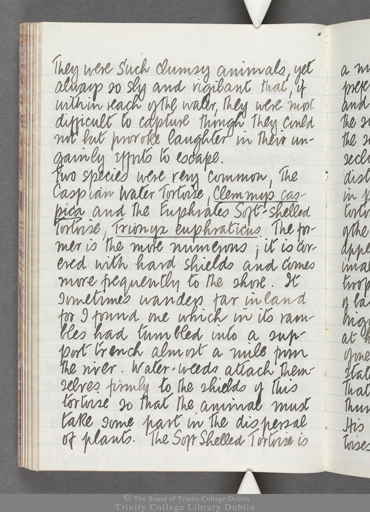 TCD MS 10516 folio 63 verso