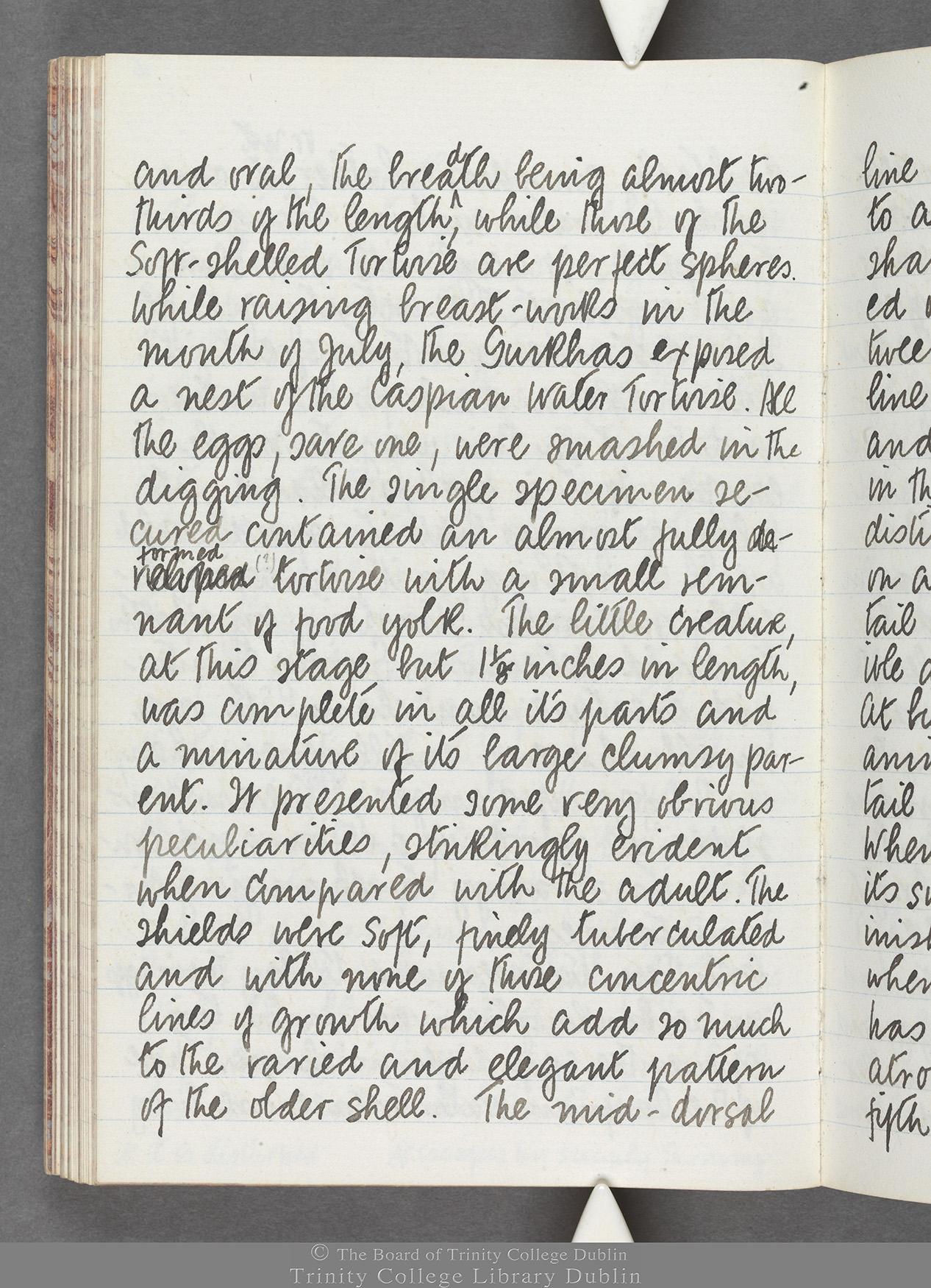 TCD MS 10516 folio 65 verso