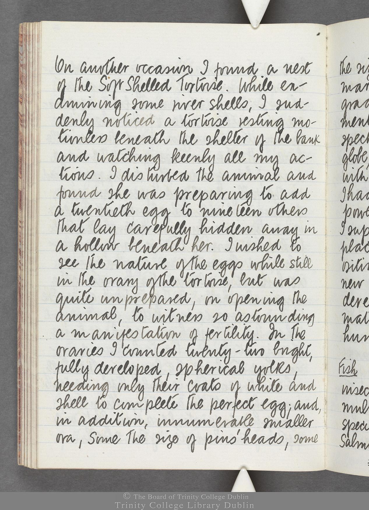 TCD MS 10516 folio 66 verso