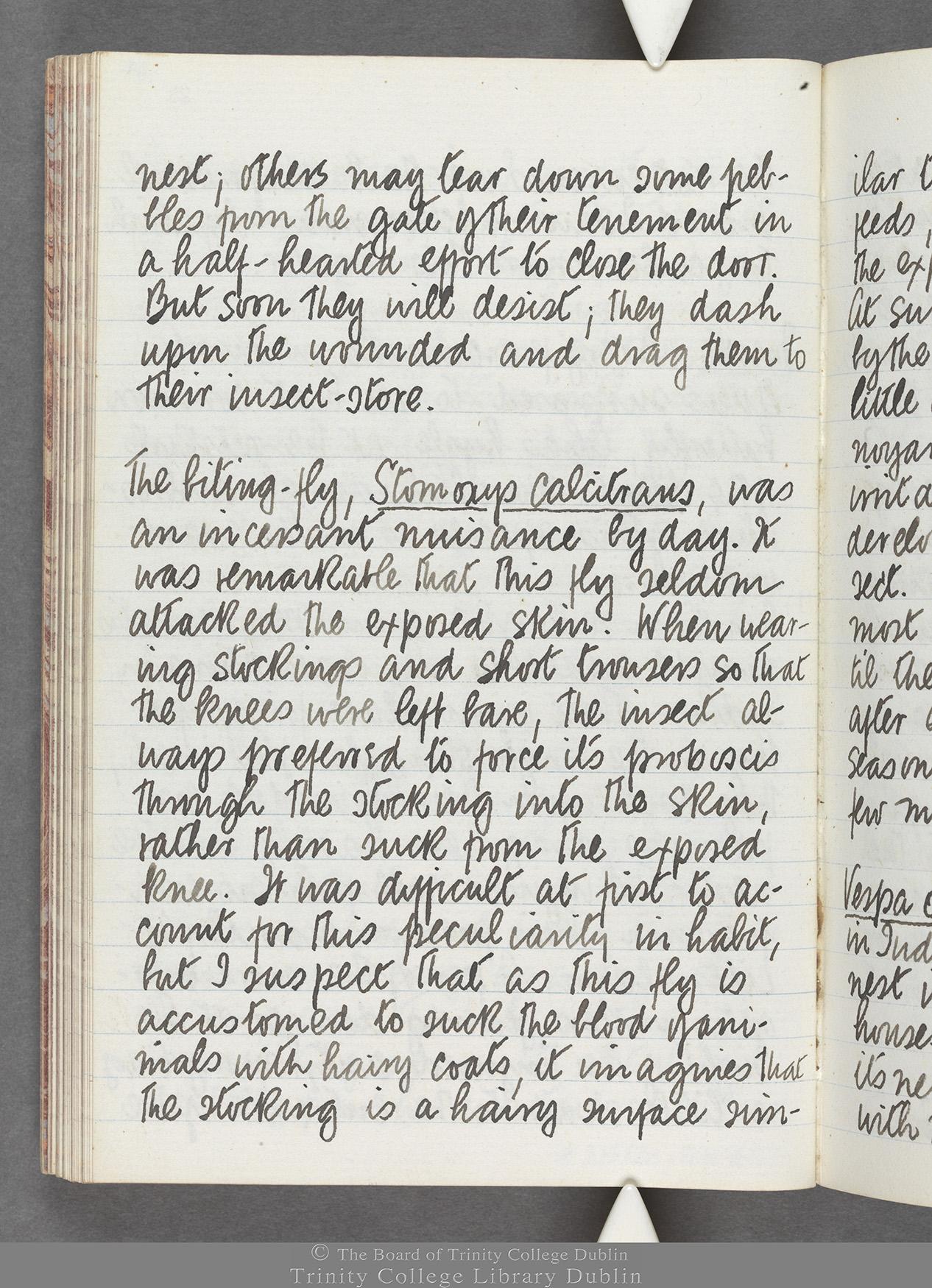 TCD MS 10516 folio 69 verso