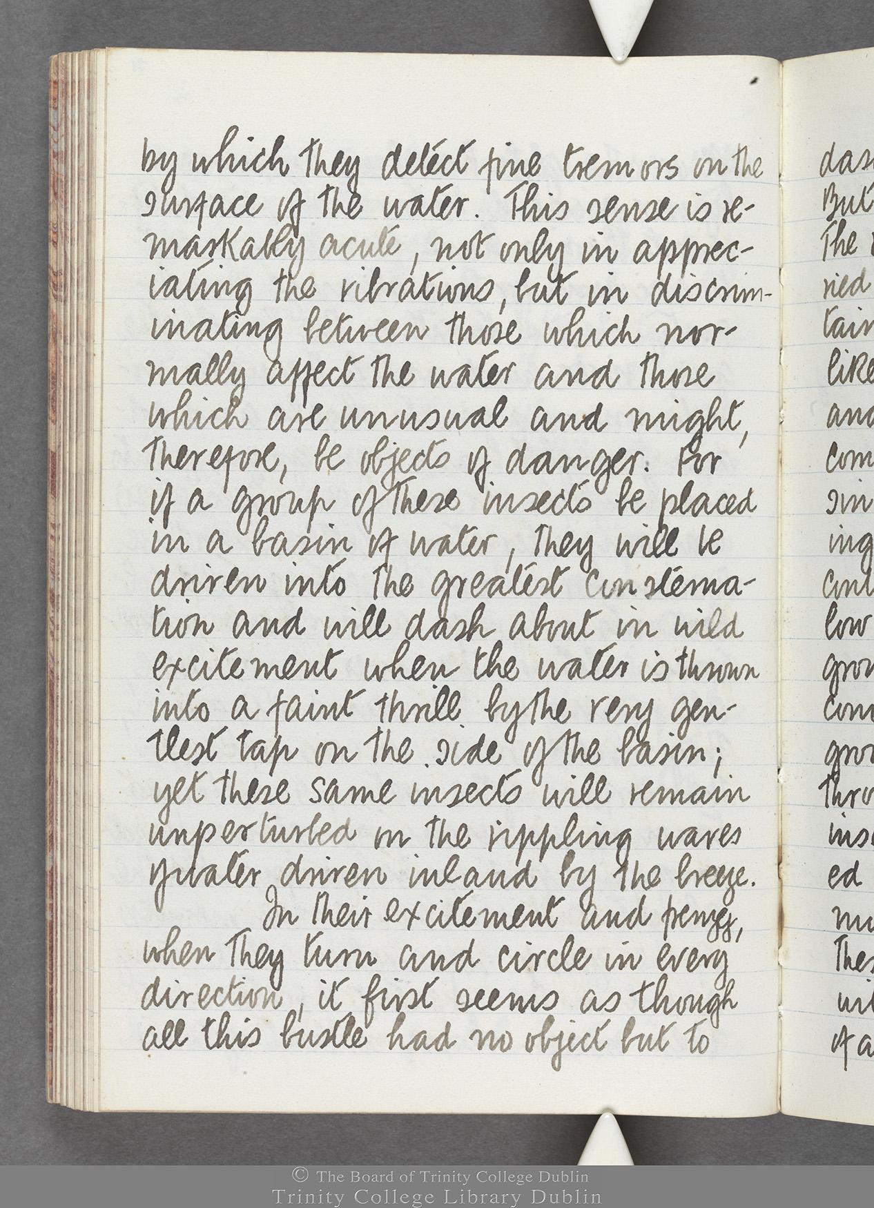 TCD MS 10516 folio 71 verso
