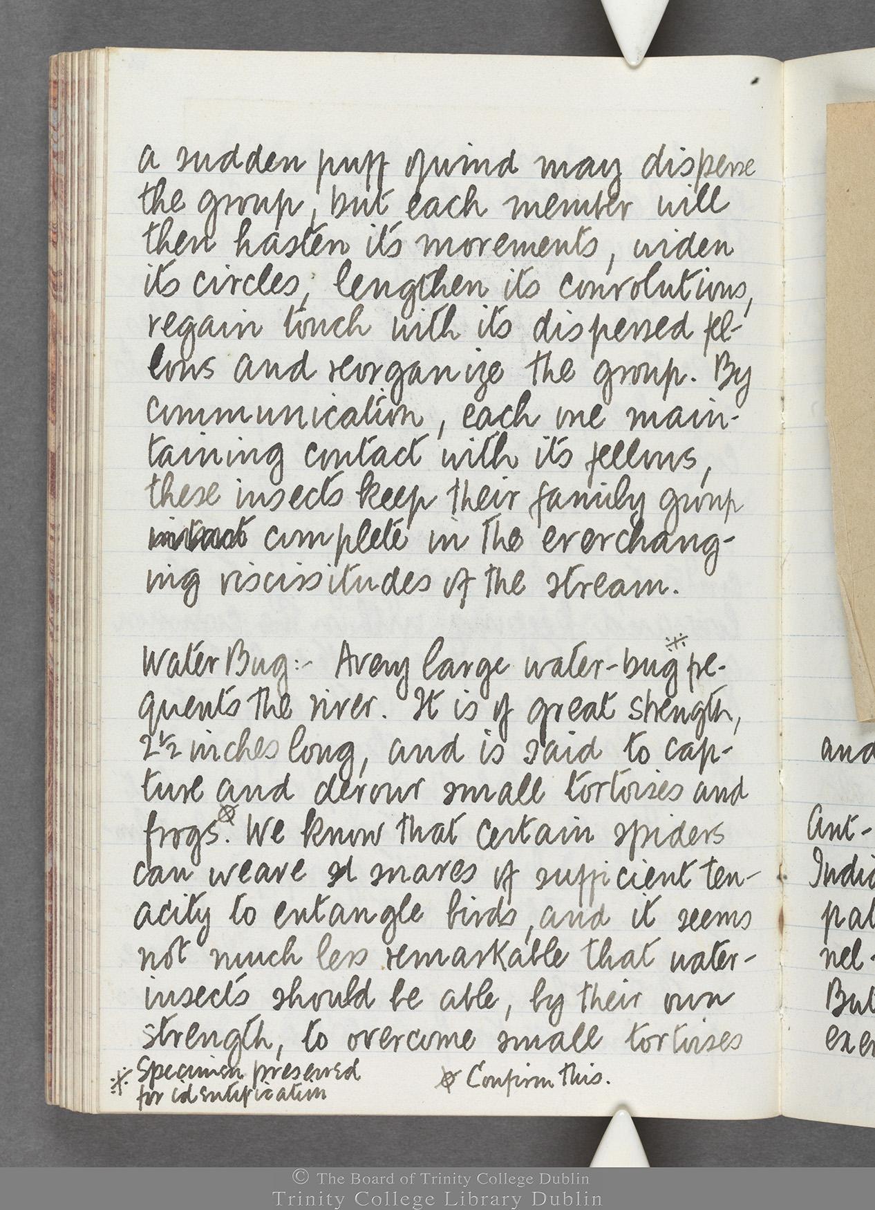 TCD MS 10516 folio 72 verso