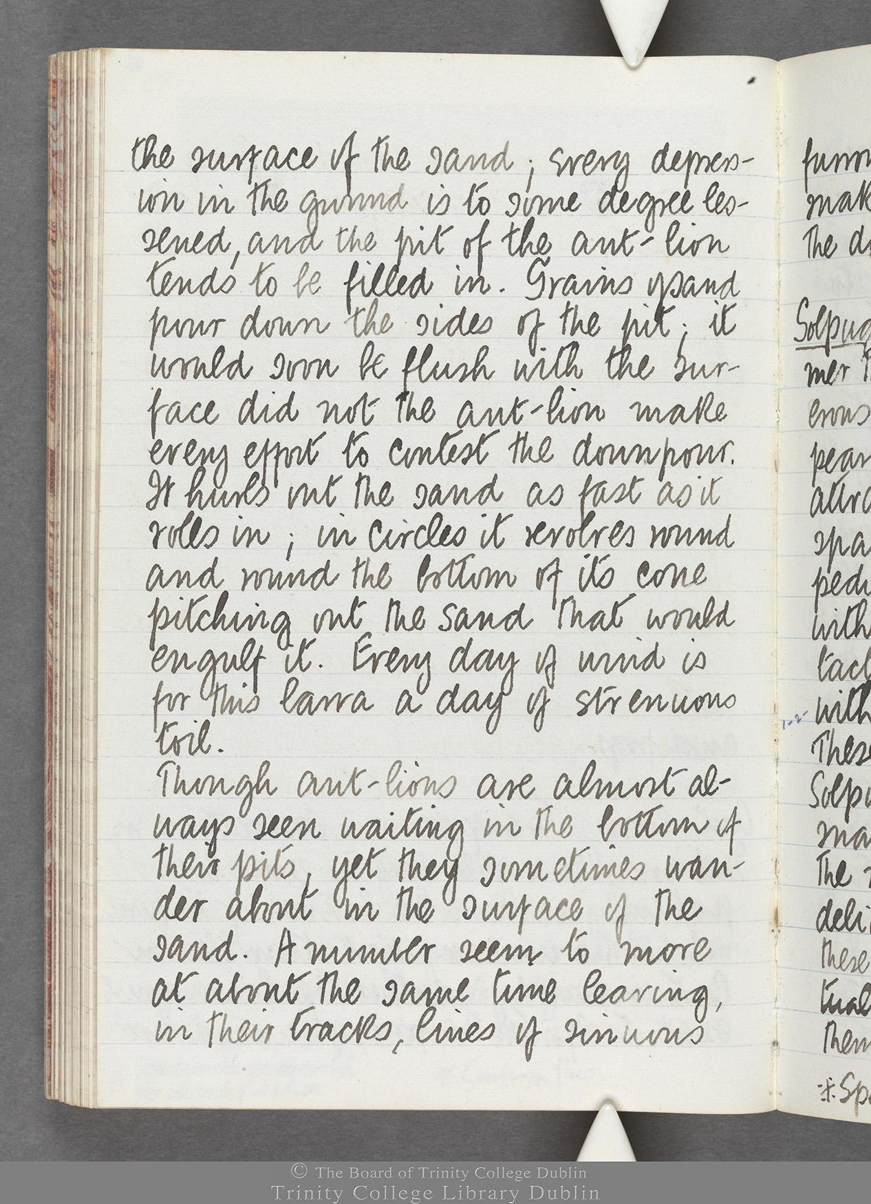 TCD MS 10516 folio 73 verso